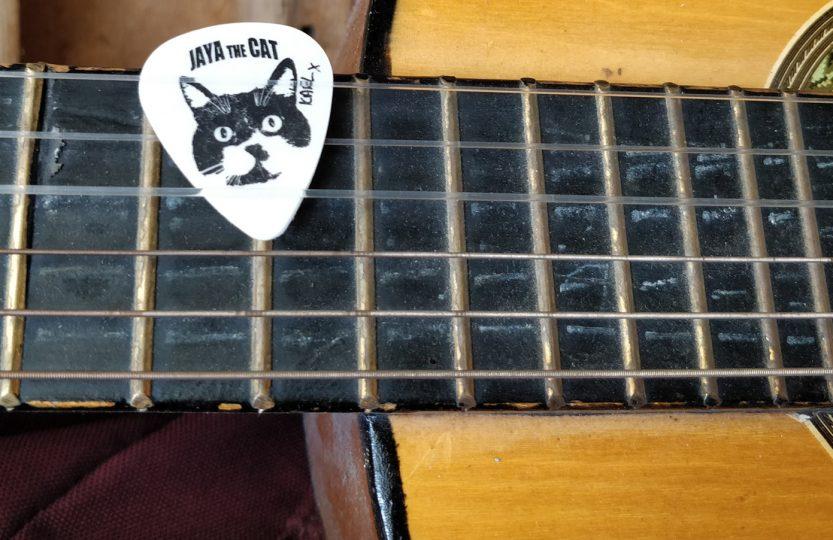 Jaya the cat - Karl's cat plectrum